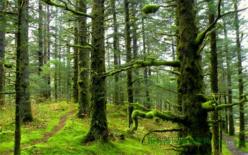 mossy forest wallpapers