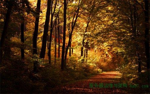 wonely autumn walk Wallpaper
